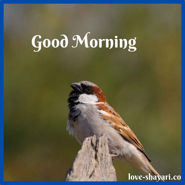 Good Morning Images with smile