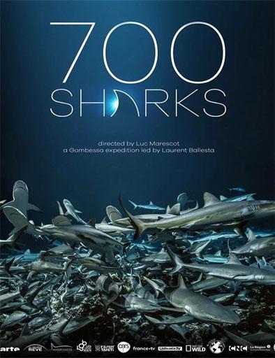 pelicula 700 tiburones