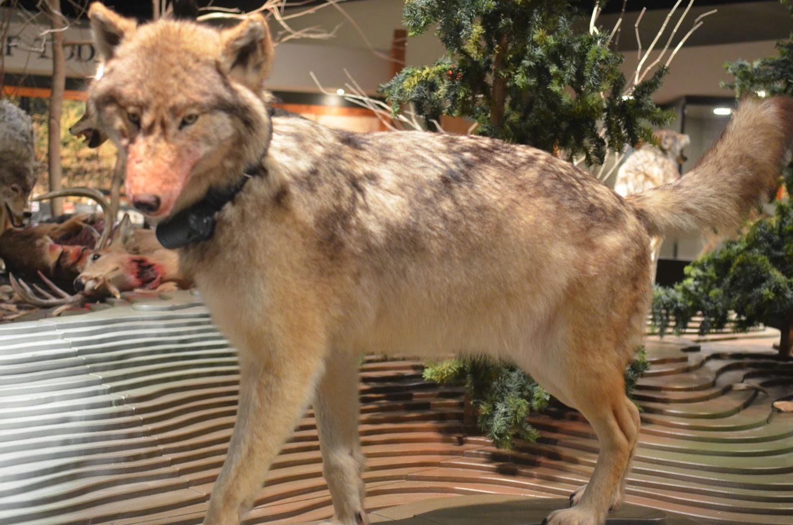 Rving Beach Bums International Wolf Center Ely Mn