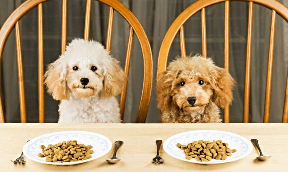 Que Comen Los Caniches