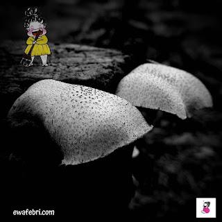 foto jamur dan bowgel