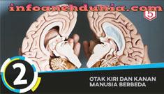 http://www.infoanehdunia.com/2017/05/5-fakta-tentang-otak-manusia.html