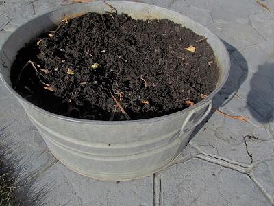My Frugal Ways this Past Week-My Spring Planter-Mom's old washtub