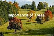 Importance of Trees  Essay for Students