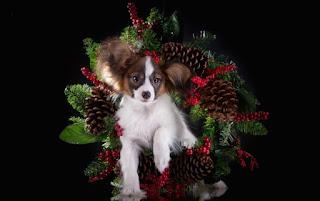köpek • yavru• kırmızı • arkadaşlık • çift • Trident • köpek yavrusu • kırmızı • bir çift • Labrador • Altın • İkili• arkadaşlar • şapka • şapka • cins • Av köpeği • oturma • iki köpek • yakışıklı • avrasya • iki yavru dil • köpekler • yaz • mutluluk • doğa • poz • arka plan • portre • dostluk • çift • bir çift• İkili • arkadaşlar • iki köpek • kenar kömür ocağı • Avustralyalı çoban • sarılmak • Avustralyalı