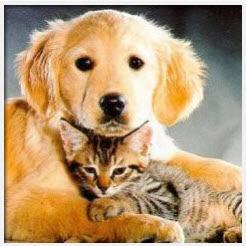 4ec27215ae70 ... Experimental Allergy αποκαλύπτει ότι η παρουσία ενός σκύλου ή γάτας στο  σπίτι δεν αυξάνει τον κίνδυνο των παιδιών να αποκτήσουν κάποια αλλεργία στα  ...