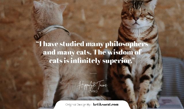 quotes bahasa inggris about cat dan artinya