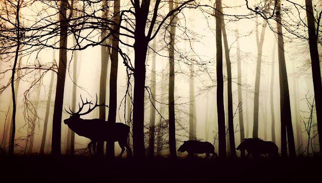 خلفيات حيوانات