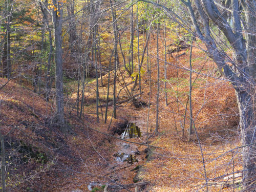 creek in a wooded valley
