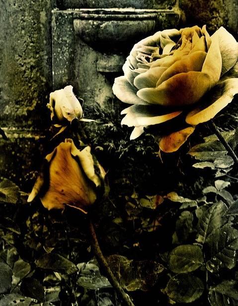 bunga-yang-terlupakan