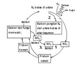 materi biologi siklus nitrogen