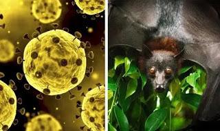 CORONAVIRUS Reasons Bats