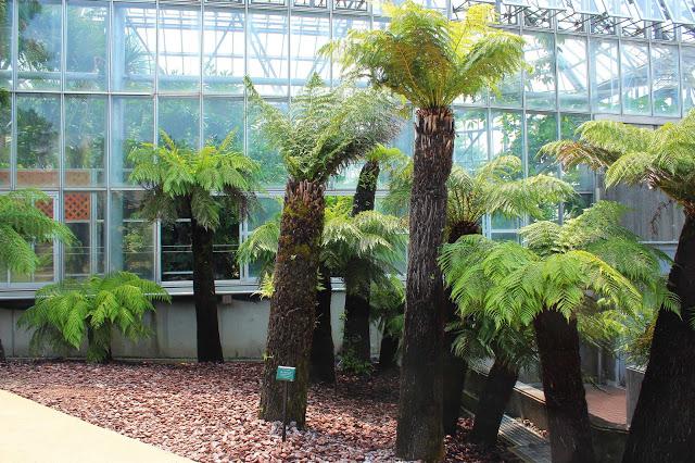 山口県、宇部市のときわ公園の植物園がリニューアルしたよ【Y】 プラントハンター西畠清順、世界を旅する植物館  オセアニアゾーン  シダの仲間、ディクソニア