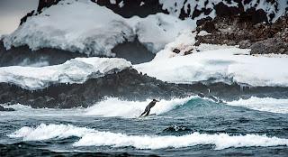 surfing antartica
