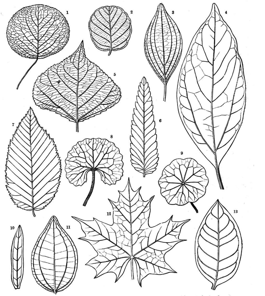 Images About Pen Ink Floral