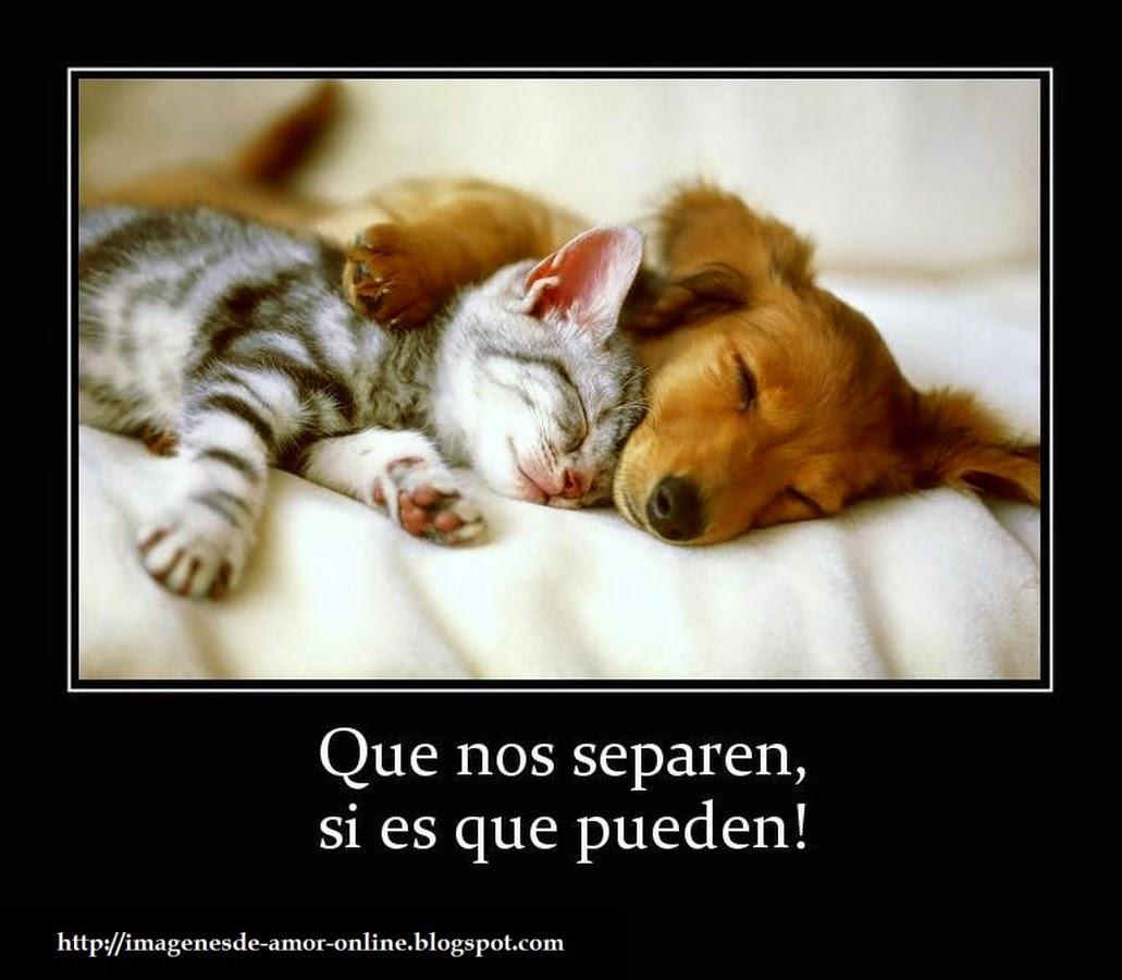 Imagenes Graciosas De Animales Haciendo El Amor