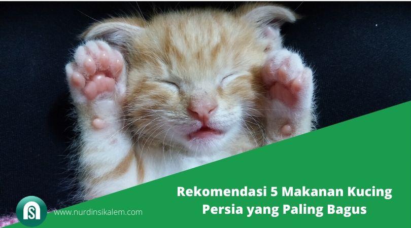 Rekomendasi 5 Makanan Kucing Persia yang Paling Bagus