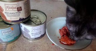 Hipoalergiczna karma dla kota.