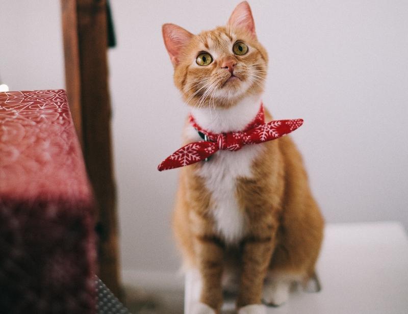 ile razy dziennie powinien jeść kot, ile posiłków dziennie dla kota, ile powinien jeść kot, jaka porcja karmy dla kota, ile karmy dla kota, żywienie kota, kocia dieta, jak prawidłowo karmić kota, karmienie kota