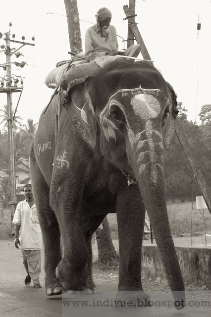 Intialainen elefantti nimeltään Laxmi