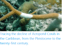https://sciencythoughts.blogspot.com/2020/05/tracing-decline-of-acroporid-corals-in.html