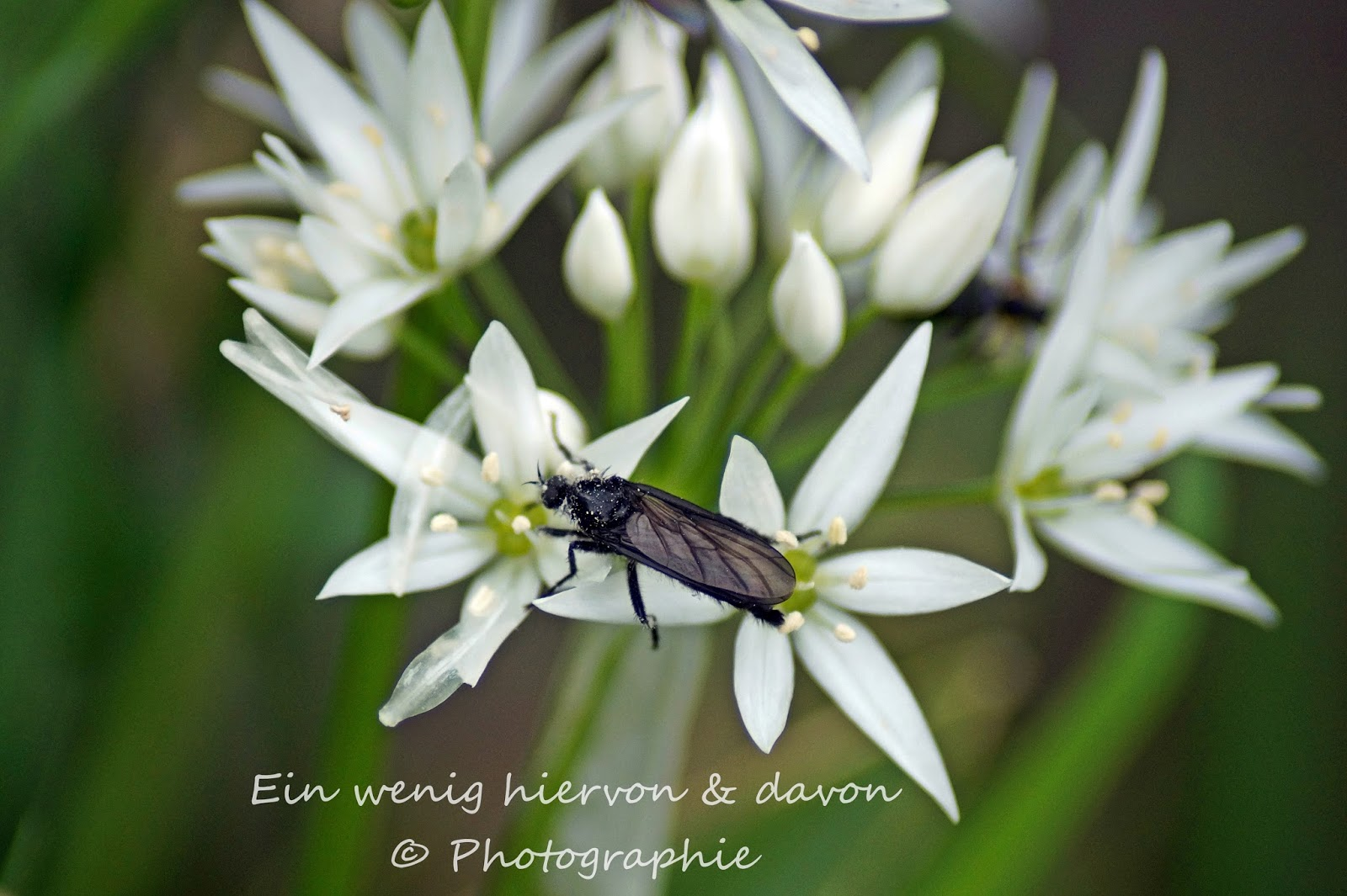 Blog & Fotografie by it's me! | Lifestyle |  http://www.einwenighiervonunddavon.de