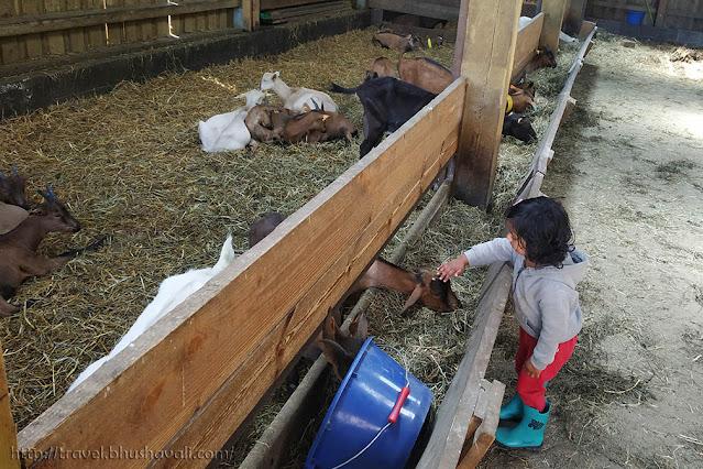 La Ferme du Planois Petting Zoo Animal Farm Brussels