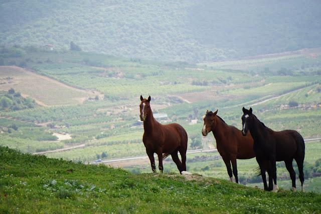 סוסים בדרך לעין הכחולה
