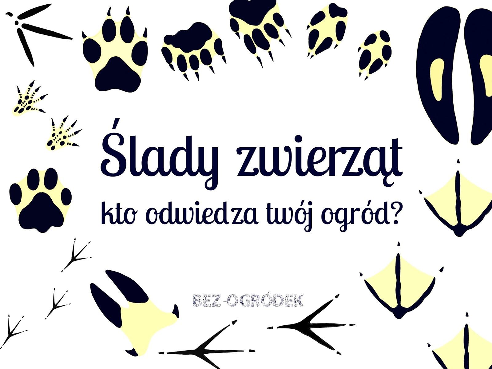 Ślady zwierząt. Kto odwiedza twój ogród? | BEZ-OGRÓDEK | blog ...