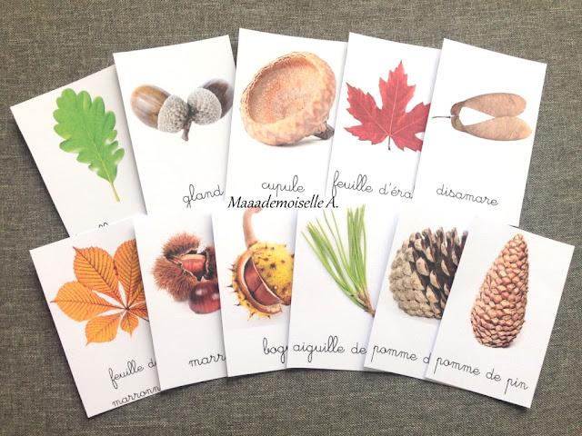|| Cartes de nomenclature à télécharger gratuitement ; Trésors d'automne