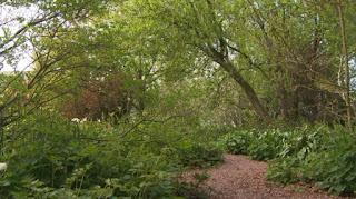 Carol Klein garden