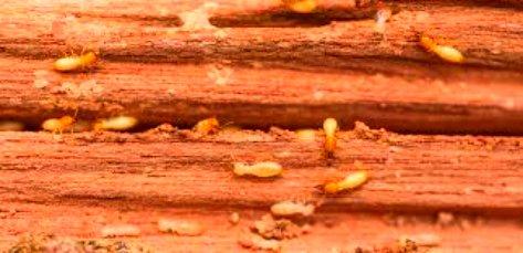 termite treatment, termite control, termite inspection, termite spray, termite proofing, termite control spray