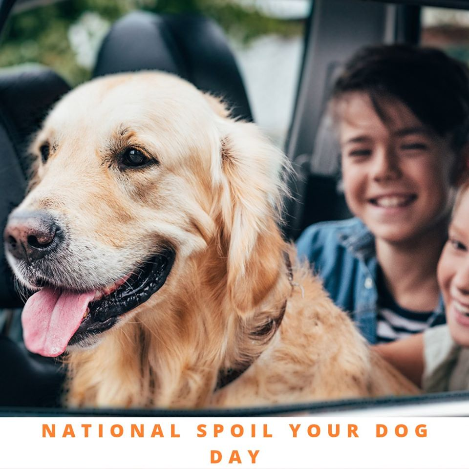 National Spoil Your Dog Day