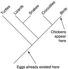 Qué vino antes, el huevo o la gallina?