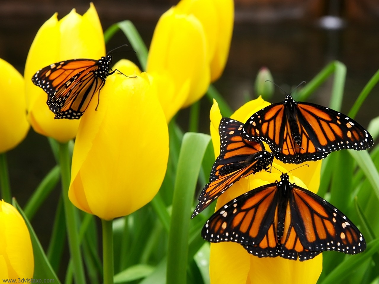 Cute Piglets Wallpaper Beautiful Butterfly Picutres Cini Clips