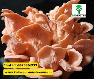 mushroom training in Satara