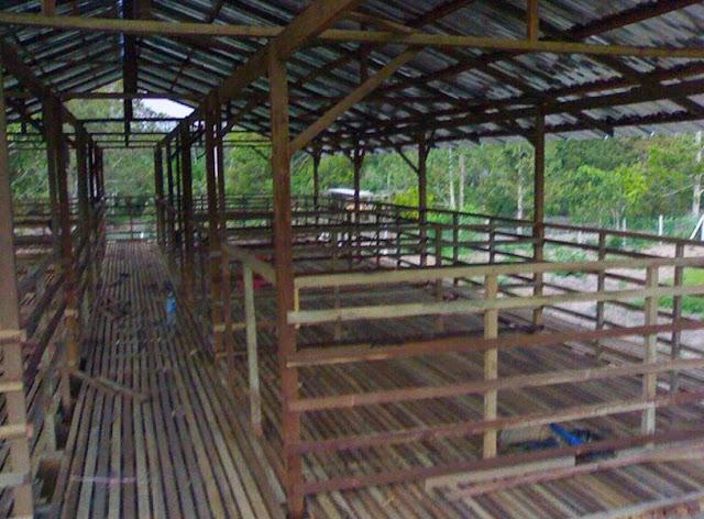 Contoh Gambar Rangka Atap Sederhana Kambing dari Bambu