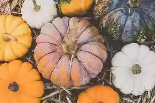 Pumpkin , Food For good eyesight