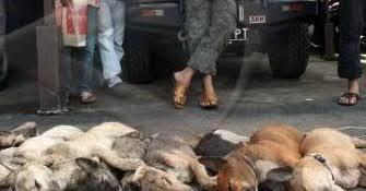 Tim Maleo III Polda Sulut Ringkus Doger Anjing Di Minahasa