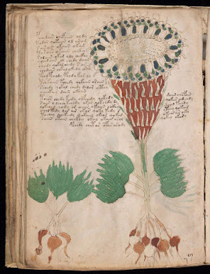 The Voynich Manuscript with Colored Illustrations PDF book