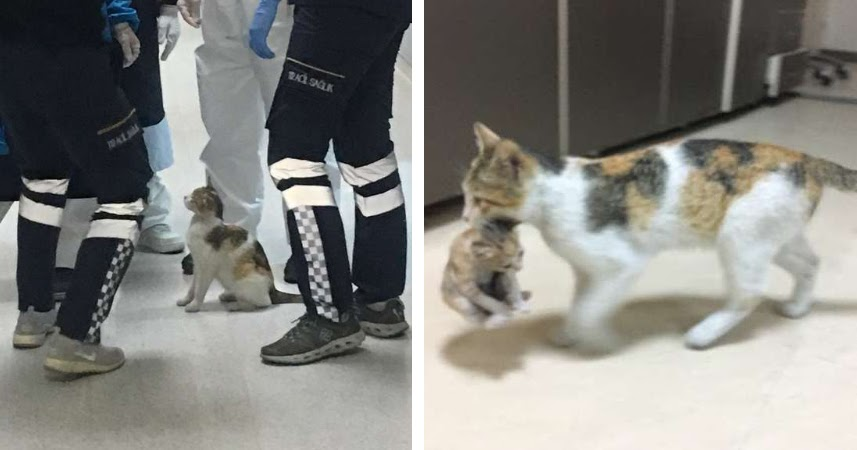Stray Cat Brings Her Baby To The hospital because he is so sick