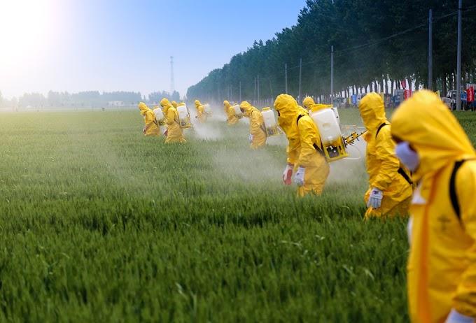 MPMA instaura procedimento para apurar a pulverização de agrotóxicos em  Buriti de Inácia Vaz