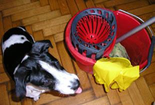 εκπαιδευση σκυλων για τουαλετα