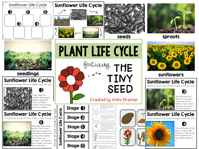 The Tiny Seed book study sunflower life cycle companion activities unit grades K-1