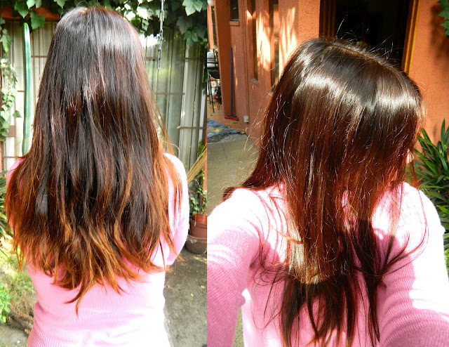 El aceite del romero para los cabellos puro