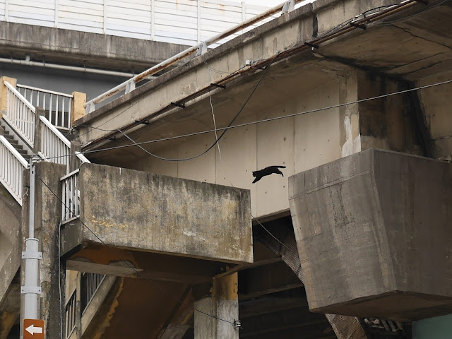 closeup of a black cat jumping from a from a bridge to a stairway at a high height