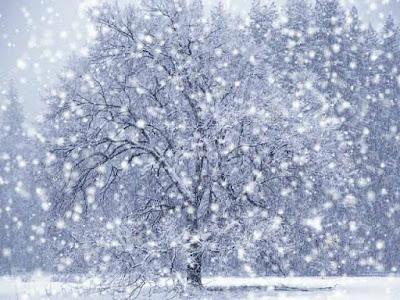 Foto de la cída de nieve sobre el árbol