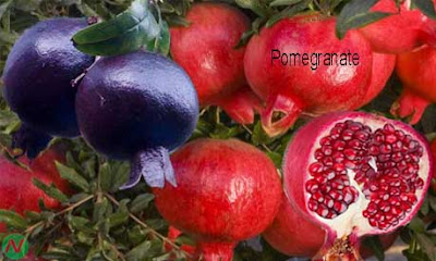 pomegranate fruit; pomegranate