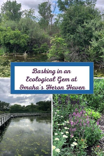Wandering the Wetlands of Omaha's Heron Haven Spotting a Wealth of Wildlife