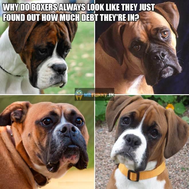 Poor Boxers…